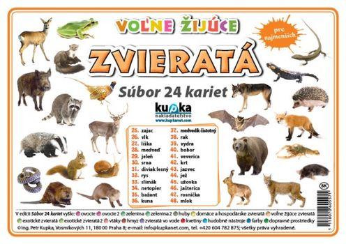 Súbor 24 kariet - zvieratá (voľne žijúce) -  Petr Kupka