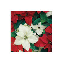 SUSY CARD - Vianočné servítky 33x33 cm - Vianočná hviezda