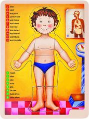 WOODY - Drevené puzzle anatómia - ľudské telo 90324